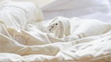 Spielzeug-Eisbär auf weissem Bettlacken